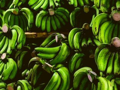 jual bibit tanaman pisang