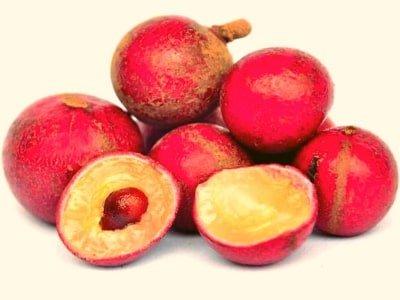 jual bibit buah kelengkeng
