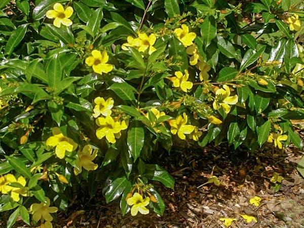bunga mandala-min