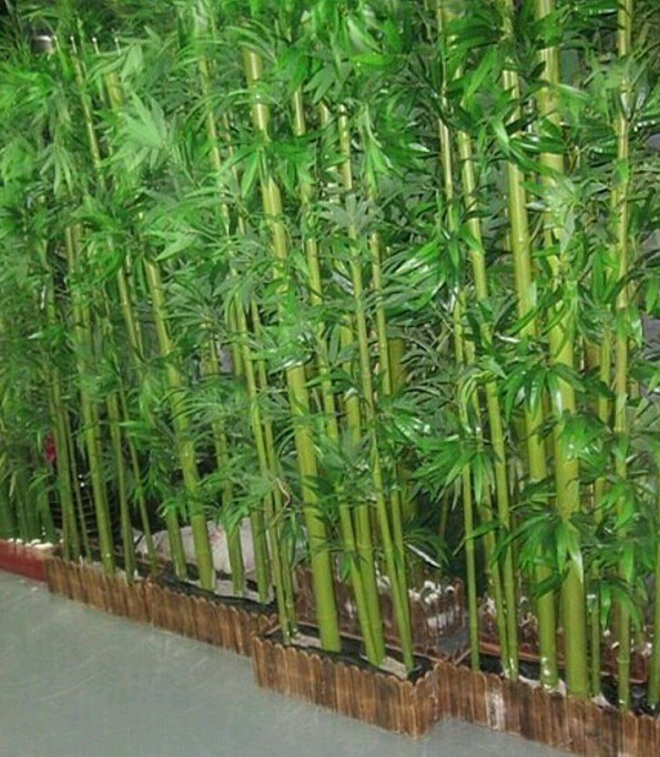 bambu_jepang_